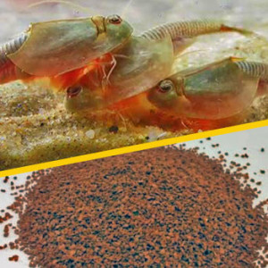 Triops Feed