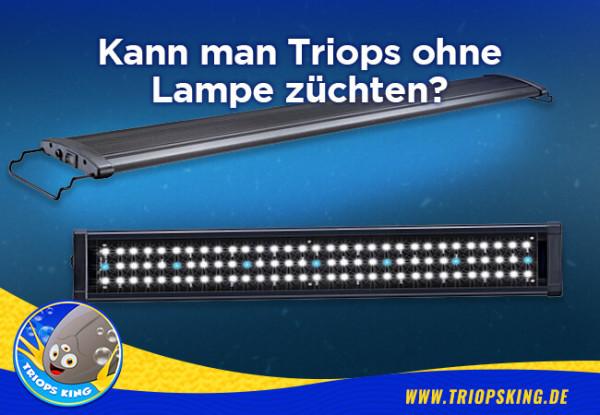 Kann man Triops ohne Lampe züchten? - Kann man Triops ohne Lampe züchten? - Urzeitkrebse Tipps