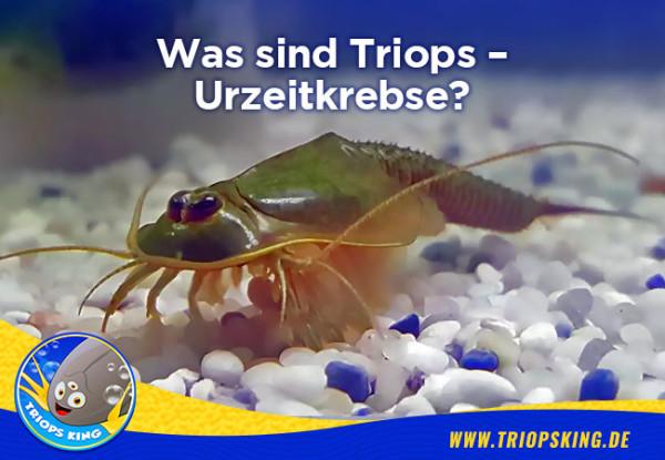 Was sind Triops - Urzeitkrebse? - Was sind Triops / Urzeitkrebse? Wissenswertes für Aquarianer