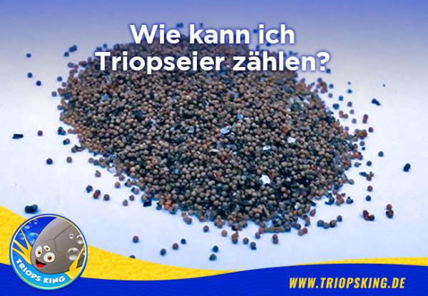 Wie kann ich Triopseier zählen? - Wie kann ich Triopseier zählen? Tipps für Hobbyzüchter von Triops King