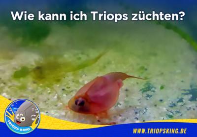 Wie kann ich Triops züchten? - Anleitung zum Triops züchten - So geht es richtig! Aufzuchtanleitung von Triops King