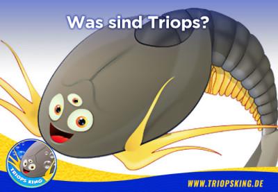 Was sind Triops? - Was sind eigentlich Triops? - Wissenswertes für Aquarianer