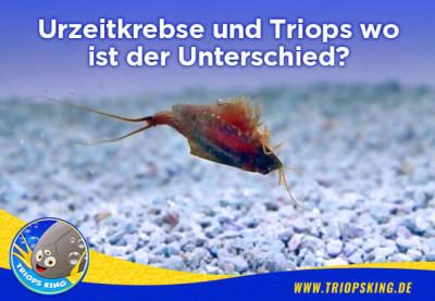 Urzeitkrebse und Triops wo ist der Unterschied? - Worin unterscheiden sich Triops von Urzeitkrebsen?