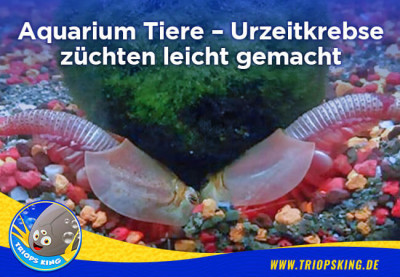 Aquarium Tiere – Urzeitkrebse züchten leicht gemacht - Aquarium Tiere für dein Aquarium - Zuchtanleitungen für Urzeitkrebse