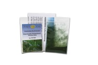 Fairy Shrimp Branchinella Thailandensis Sanoamuang Starter Set