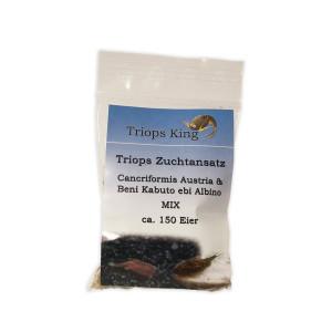 Triops Cancriformis Mix Zuchtansatz ca. 150 Eier