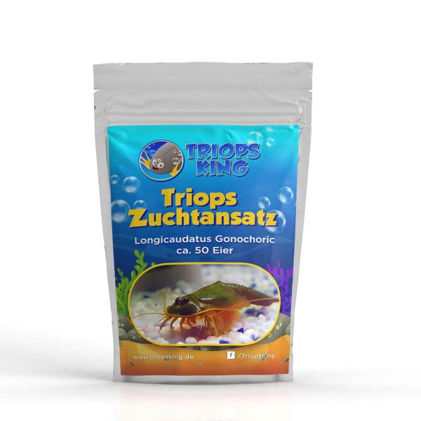 Triops longicaudatus gonochoric breeding stock 50 eggs
