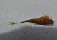 Triops Longicaudatus Multicolour Starter Set Plus