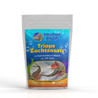 Triops Longicaudatus Black breeding approach