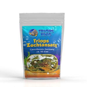 Triops Cancriformis Germany Zuchtansatz 50 Eier