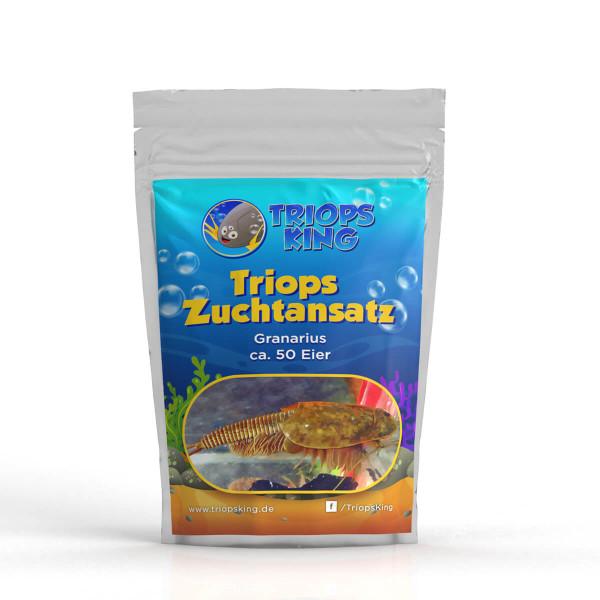 Enfoque de cría de camarones renacuajos de Triops Granarius
